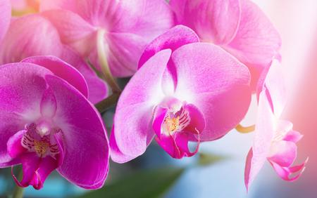pink orchid closeup Standard-Bild