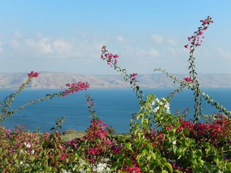 galilee: Flowers, Sea of Galilee and the Golan Heights in the distance, Israel.