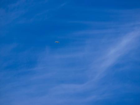 oiseau mouche: oiseau voler haut au ciel bleu