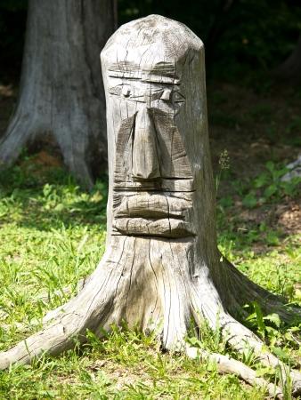 gezicht in het bos op oude log Stockfoto