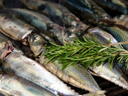 fish on grill with rosemary and olive oil