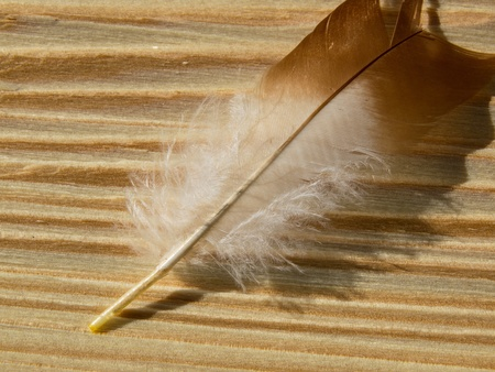feather on the wooden plank photo