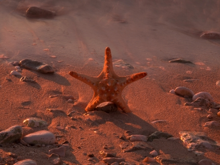 Summer vacations - starfish on sunset sea sand beach Stock Photo - 16960279