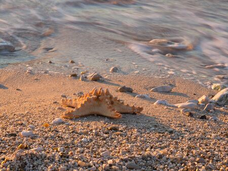 Summer vacations - starfish on sunset sea sand beach Stock Photo - 16960283