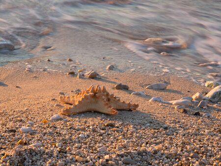 Summer vacations - starfish on sunset sea sand beach Stock Photo - 16960283