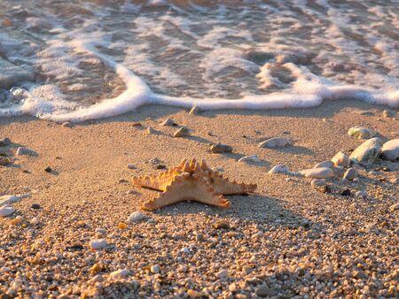 Summer vacations - starfish on sunset sea sand beach Stock Photo - 16960286