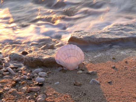 shell in the sea and golden sunset Stock Photo - 16960287
