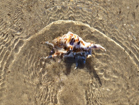 ostracean: shell in the sea on the sand beach