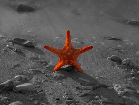 Summer vacations - starfish on sunset sea sand beach Stock Photo - 17069088