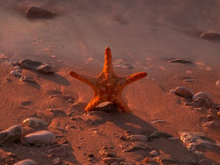 Summer vacations - starfish on sunset sea sand beach Stock Photo - 17069098