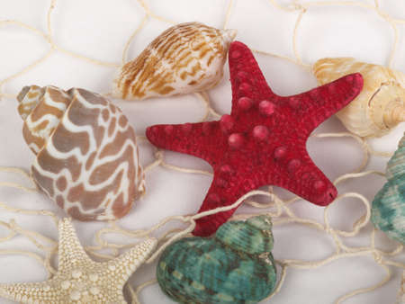 inference: Seashells and starfish caught in a white fishing net for use as an aquatic inference or decorative background  Stock Photo