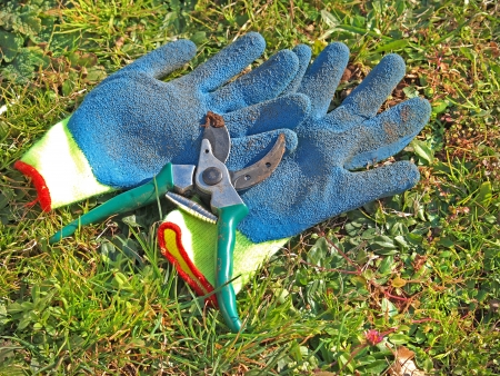 pruning scissors: pruning scissors and gloves in the grass