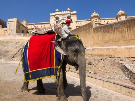 fort: India, Rajasthan, Jaipur, the Amber Fort, elephant driver