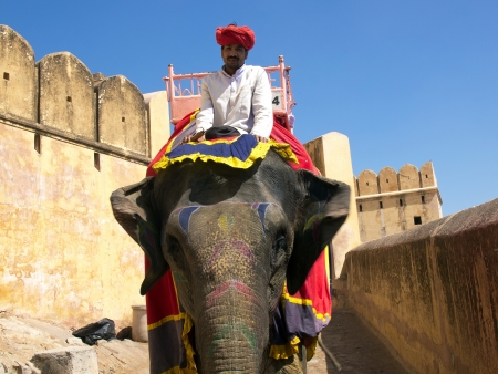 amber coloured: India, Rajasthan, Jaipur, the Amber Fort, elephant driver