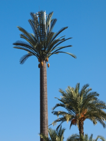 Cellular Phone tower disguised as a  artificial palm tree in Marrakesh