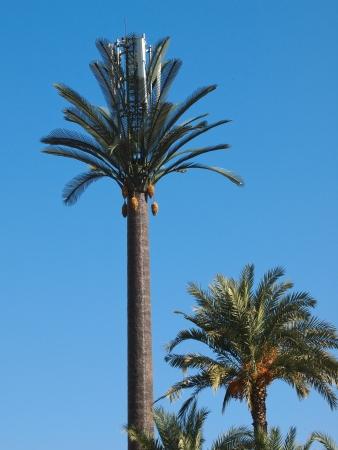 Mobiele telefoon toren vermomd als een kunstmatige palmboom in Marrakesh