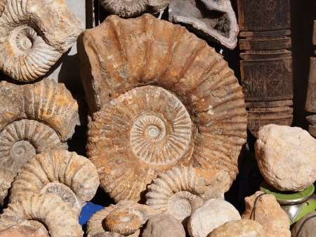 petrified fossil: fossil spiral snail stone real ancient petrified shell o open market in Marakesh,Morocco