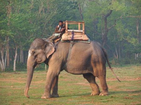 man rijdt olifant in natuurpark Chitwan, Nepal