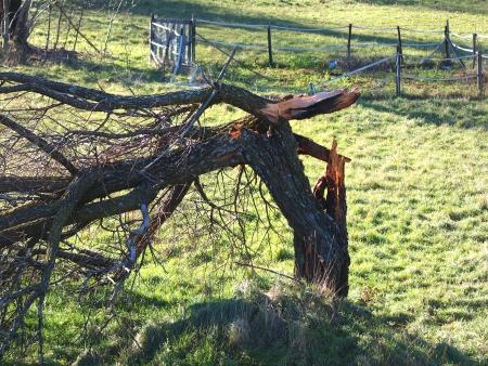 tree broken after heavy storm         Stock Photo