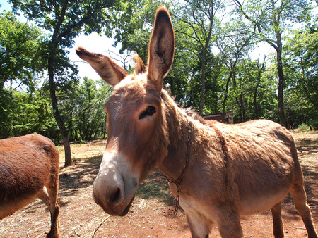 cute and funny donkey on the farm              Stockfoto