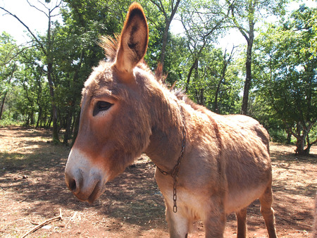 cute and funny donkey on the farm              photo