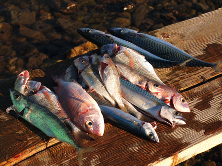 fresh fish cleaned on the shore after fishing photo