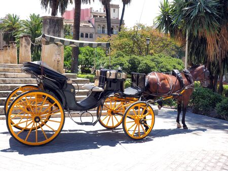 Traditional horse and carriage waiting for tourists