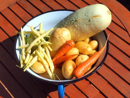 green been: fresh picked vegetables in metal bucket