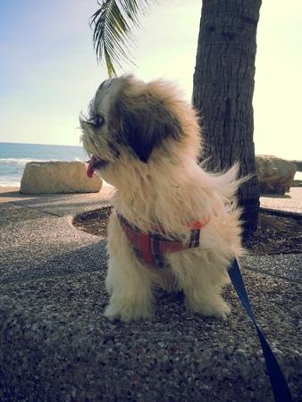 helpmate: Dog on beach Stock Photo