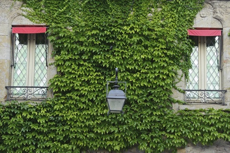 clinging: Window covered in green ivy in Carcassone Stock Photo