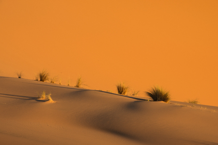 Scenic and beautiful sand desert near Merzouga, Morocco