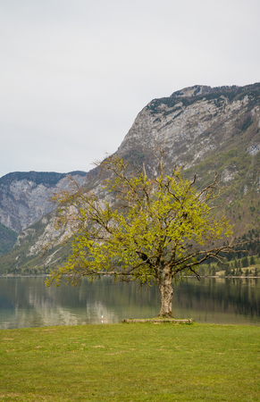 bohinj: Scenic Bohinj glacier lake and its green surroundings in Slovenia during spring time