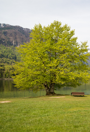 Scenic Bohinj lake and its green surroundings during spring time