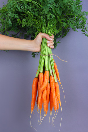 Woman hand holding bunch of whole fresh raw carrots on gray background.