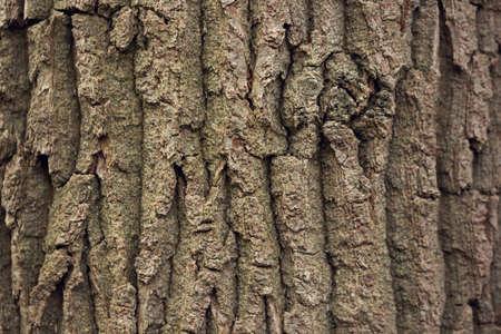Old tree bark texture. Natural abstract background. Reklamní fotografie