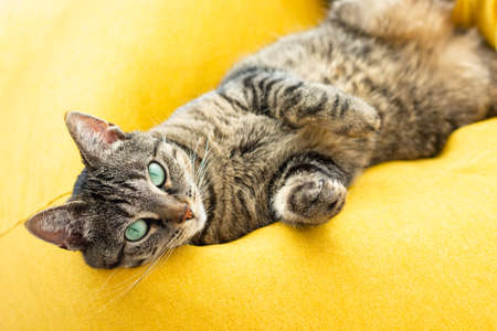 Cute tabby cat with green eyes lies on bright yellow bean bag.