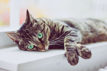 Cute tabby cat with green eyes lies on white windowsill. Boring mood.
