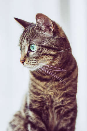 Cute tabby cat with green eyes on white background.