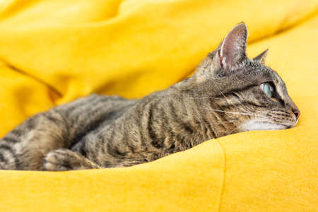 Cute tabby cat with green eyes lies on bright yellow bean bag. Boring mood.