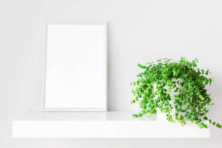 White photo frame and indoor plant on white bookshelf. Home decoration. Place for design.