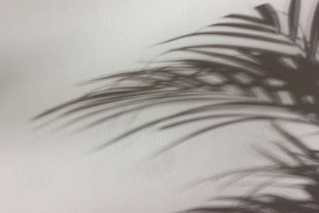Palm leaves shadow on white wall. Abstract nature background.