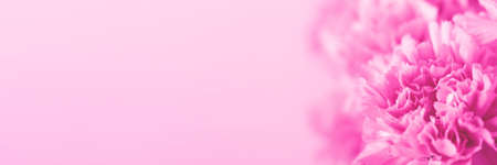 Pink carnation flower on light pink background. Soft focus. Banner foe website. Place for text. Фото со стока