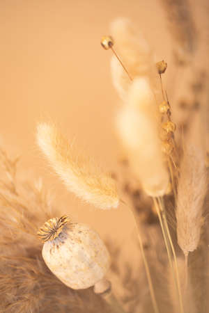 Bouquet of beautiful beige dried flowers. Selective focus, blurred background. Minimal home decoration concept.