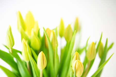 Bouquet of fresh yellow unopened tulips. Selective focus. Spring background.
