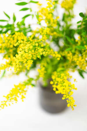 Bouquet of fresh yellow flowers in dark gray vase on white. Selective focus. Spring background.