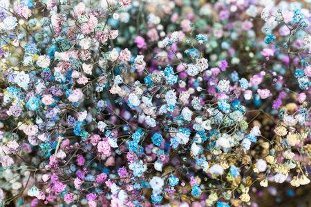 Colorful bouquet of gypsophila babys-breath . Фото со стока