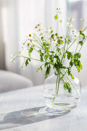 Bouquet of chamomile in a glass vase on light gray background in sunny day.