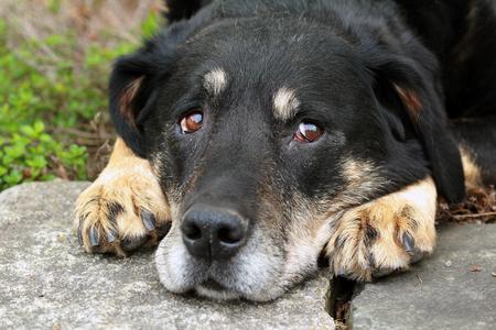 Dog laying down Stock Photo