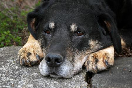 dog outside laying down Reklamní fotografie