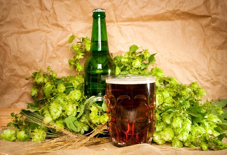 beer with hop and wheat on sacking still-life  photo